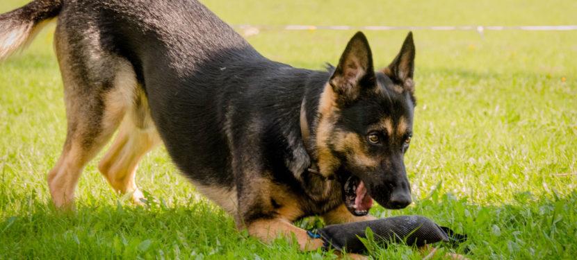 Koira Haukkuu Kerrostalossa