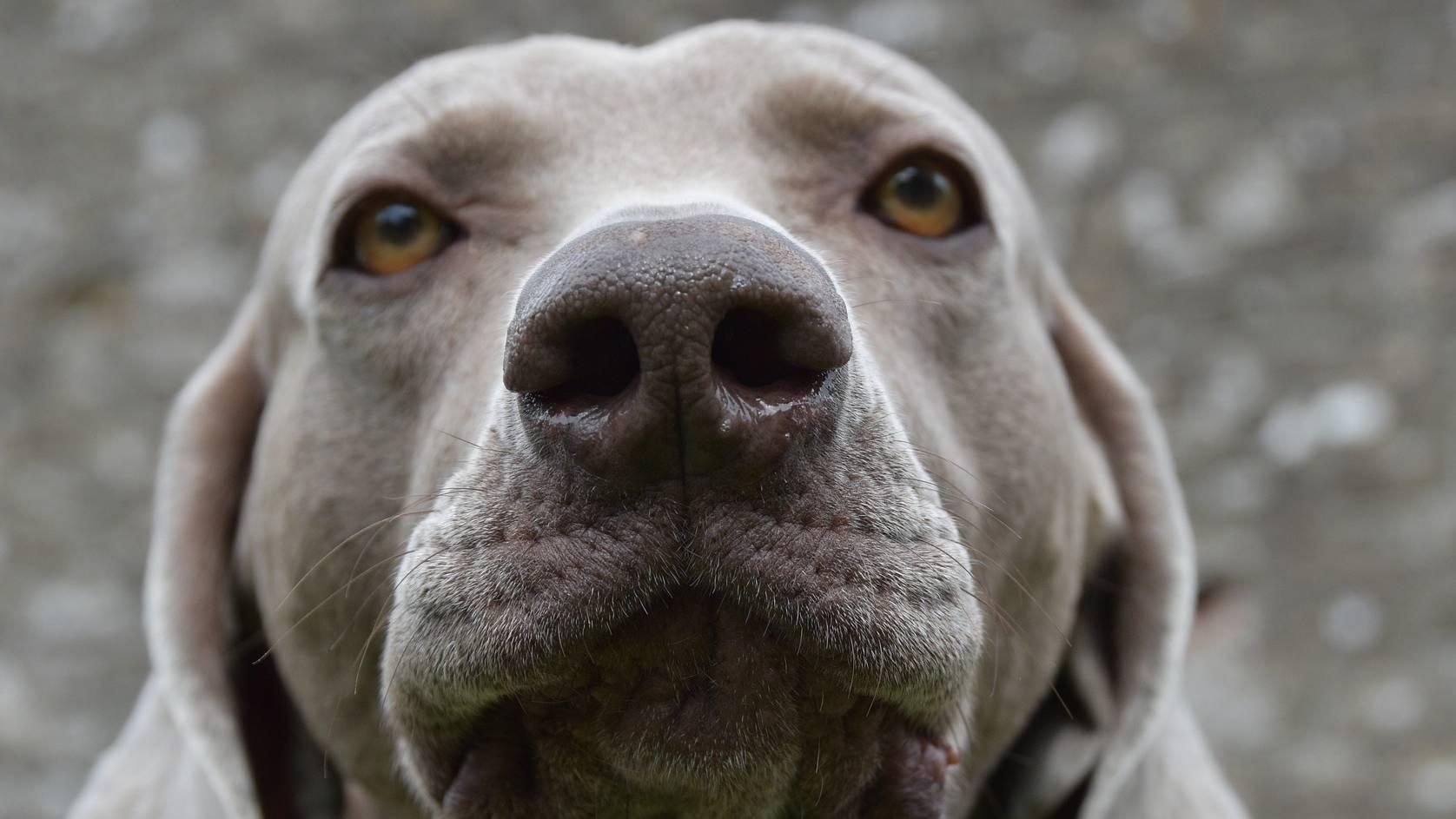 väkivalta ei kuulu koiran kouluttamiseen