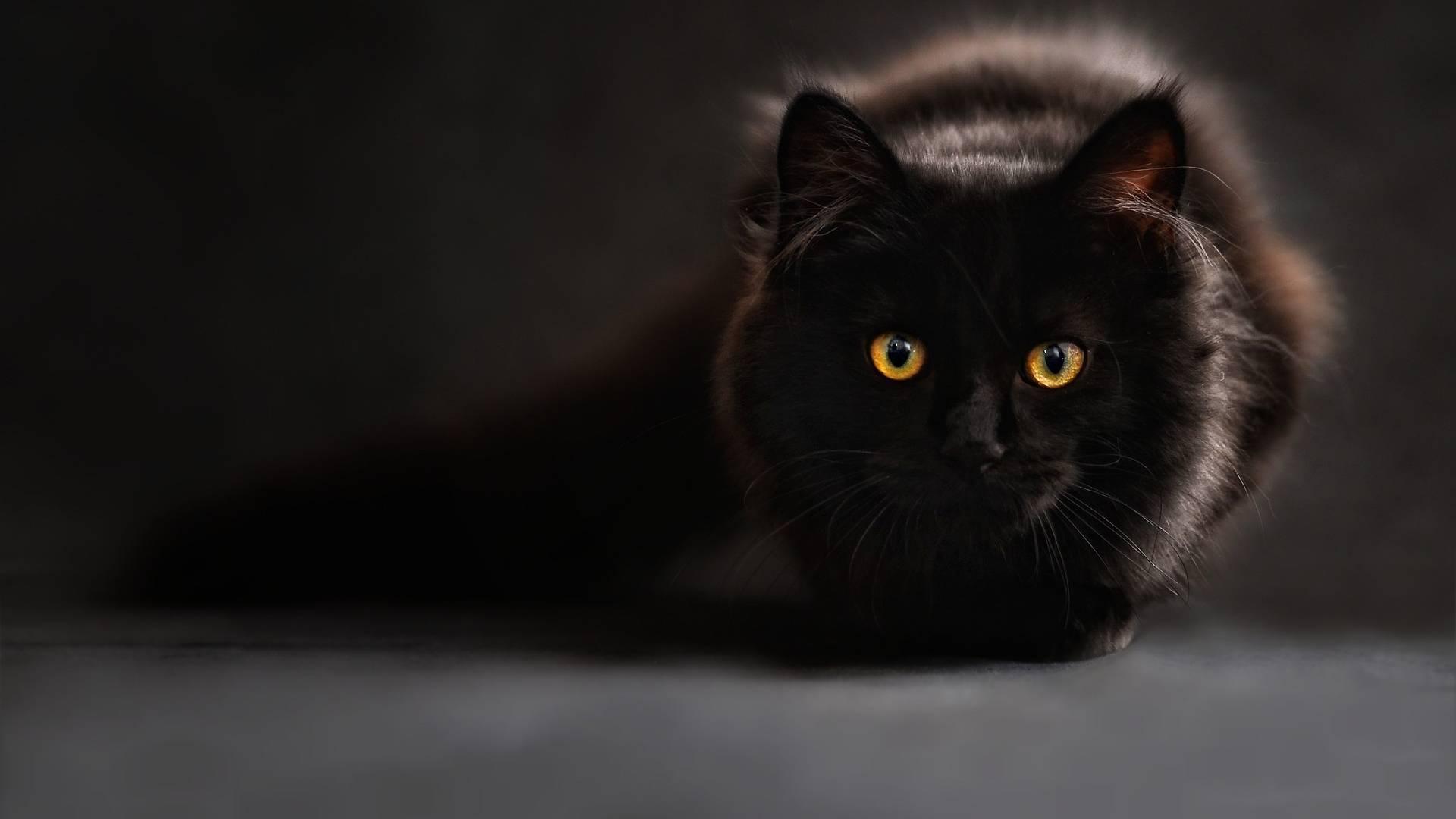 kissan stressiä voi lievittää