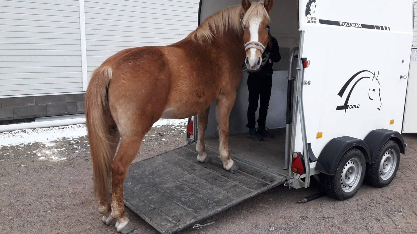 hevosen lastaaminen