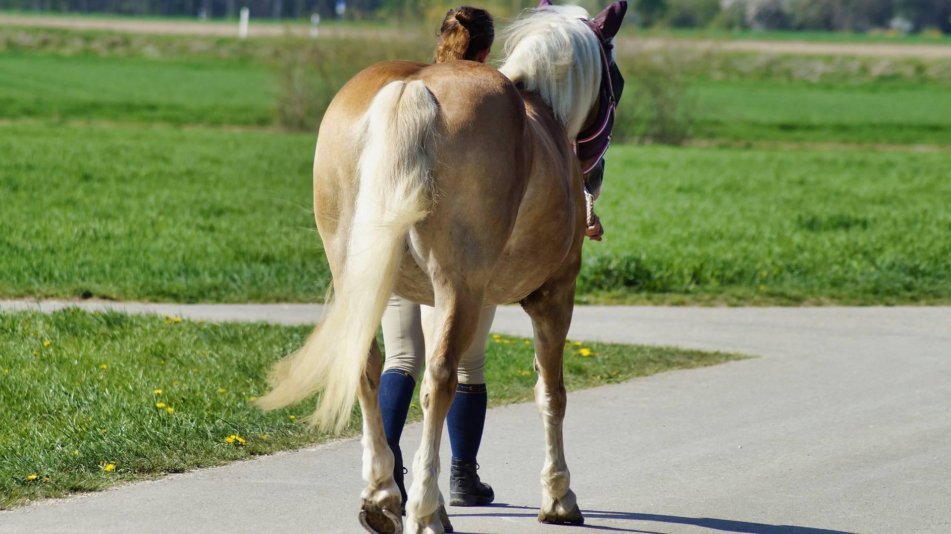 hevosen pöllövirta