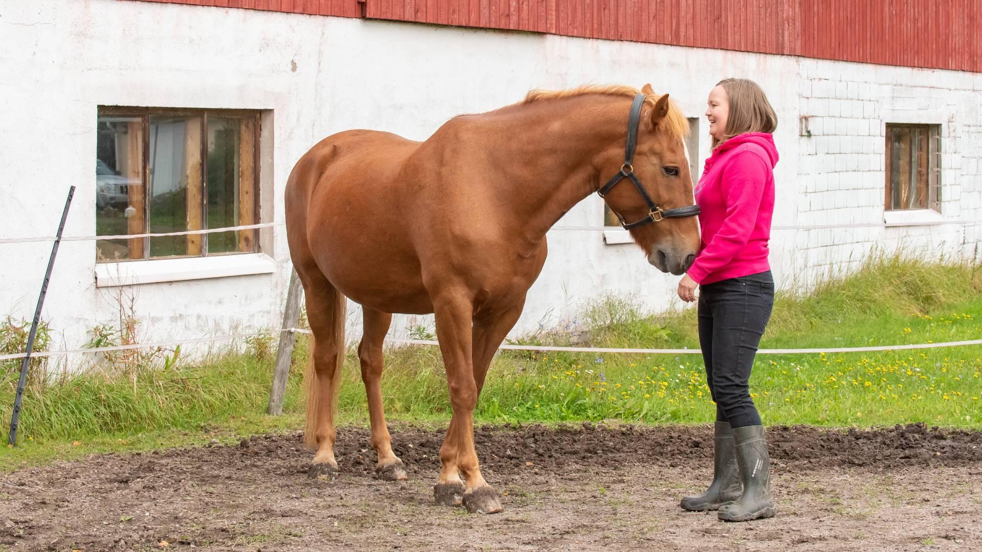 hevosen kouluttaminen