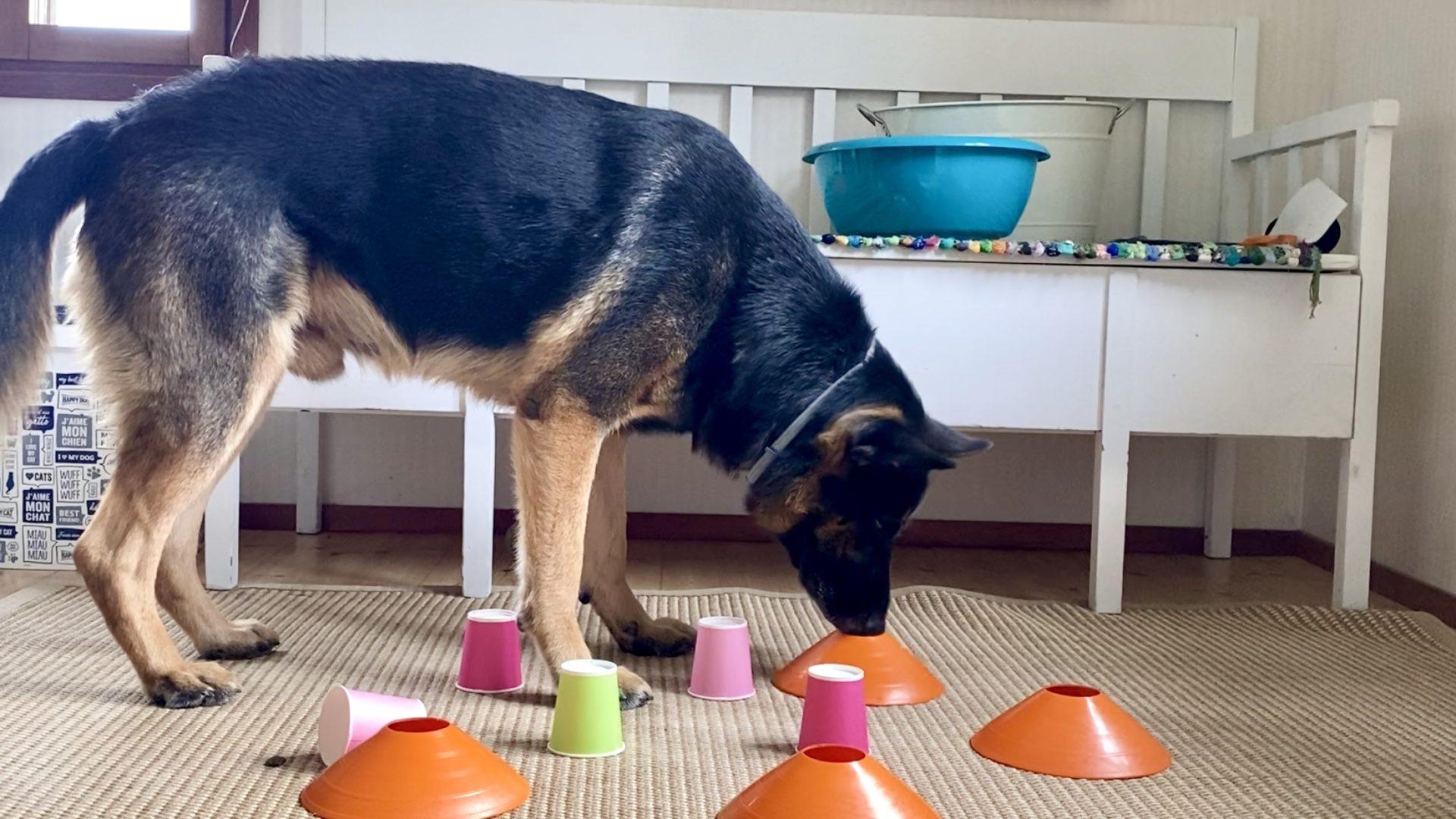 koiran ruokinta aktivoi myös mieltä