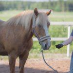 minkälainen palkkio sopii hevoselle