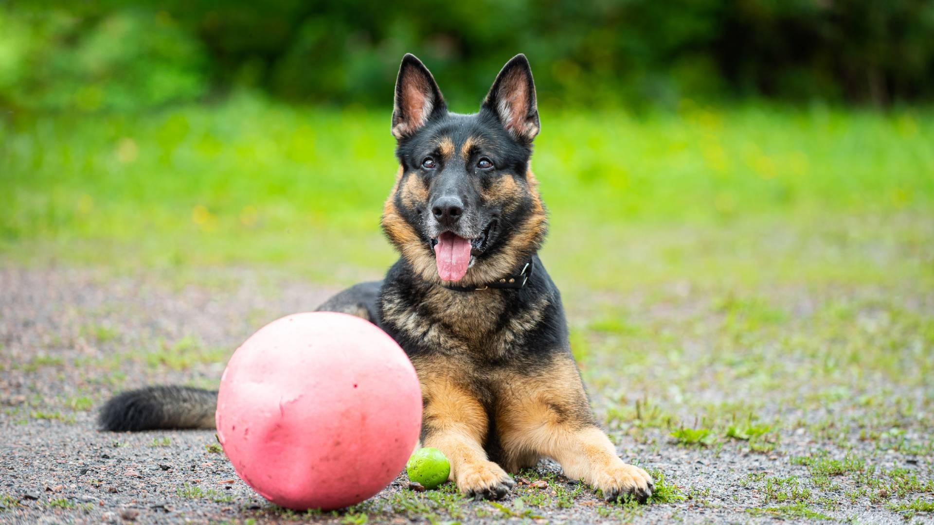 koiran vireensäätely